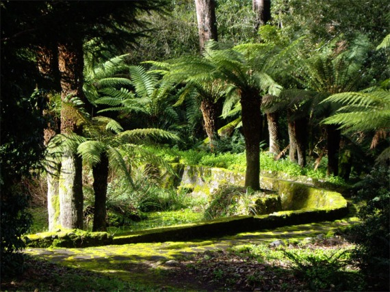 The Fern Walk
